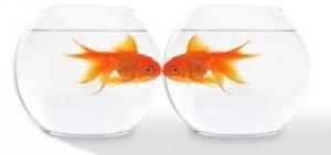 Encuentro de parejas